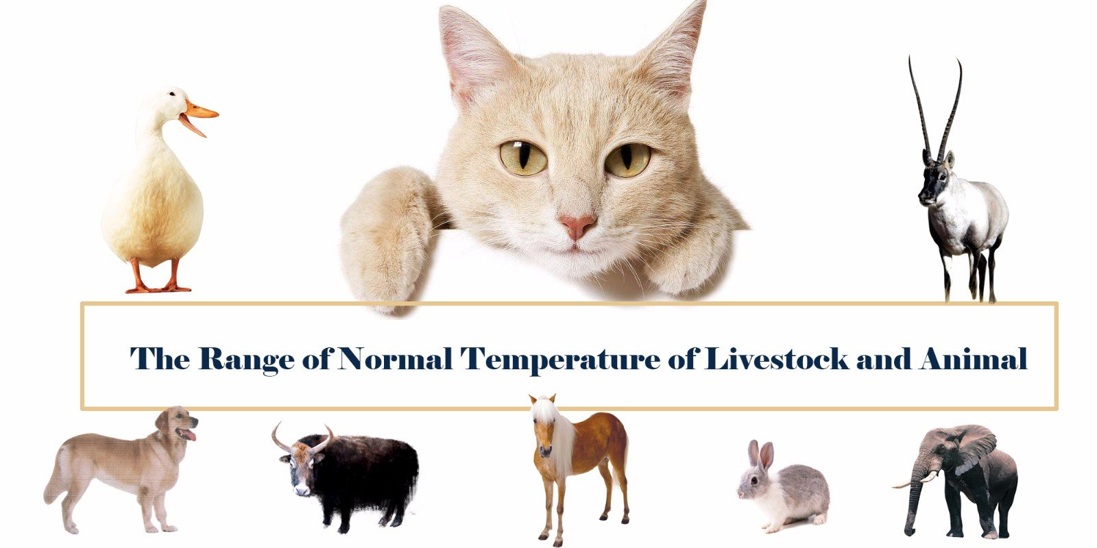 The Range of Normal Temperature of Livestock and Animal